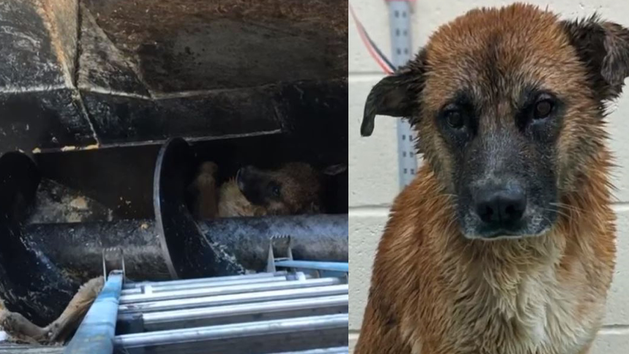 VIDEO: Dog rescued from deep inside Memphis meat processing pit