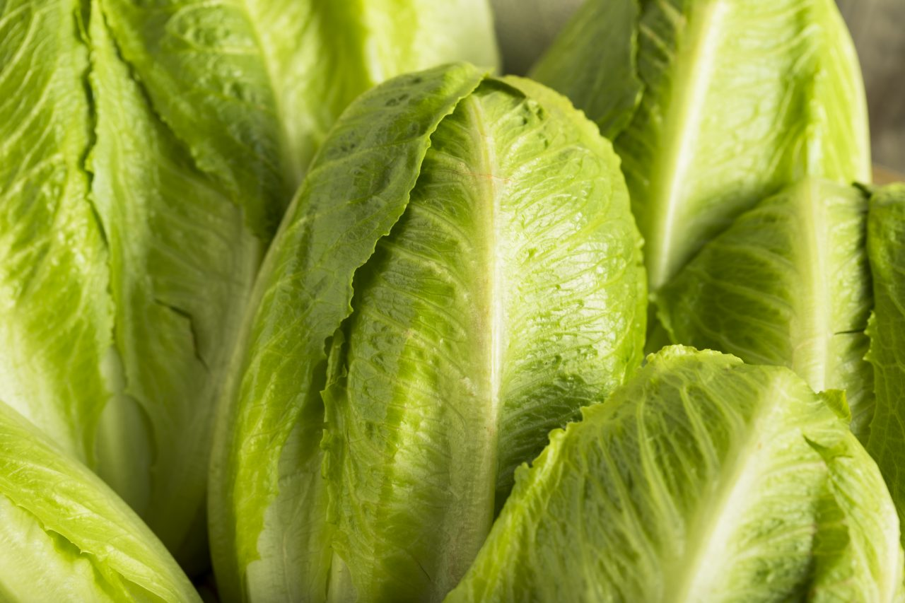 Lettuce Warnings For Christmas 2021 Thousands Of Romaine Lettuce Packages Recalled Due To Possible E Coli Contamination Fda Reports Wreg Com